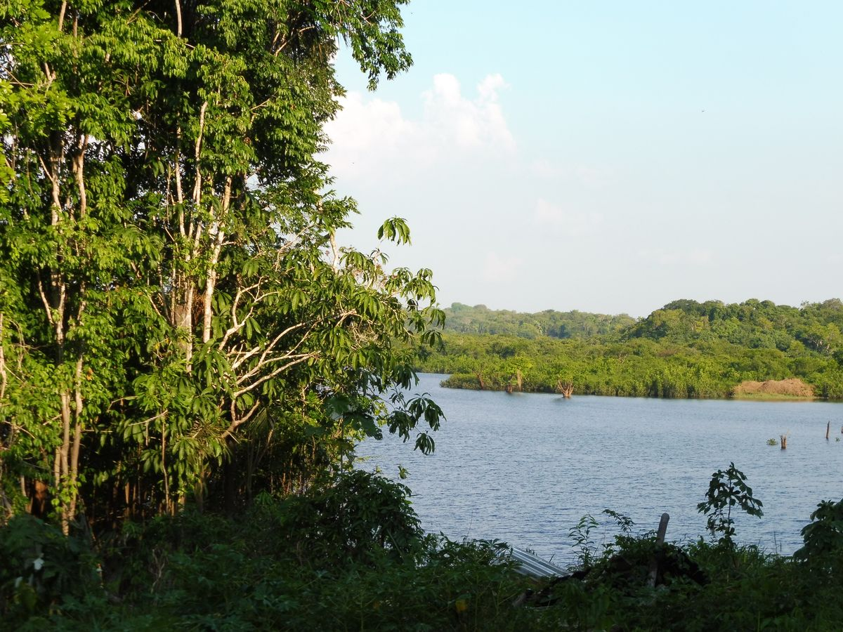 amazon jungle (37)